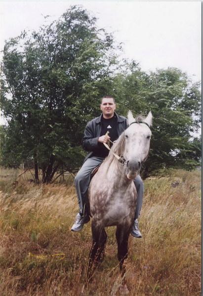 серый, в яблоках, конь